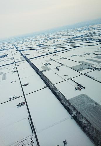 帯広事業所近傍の白樺並木