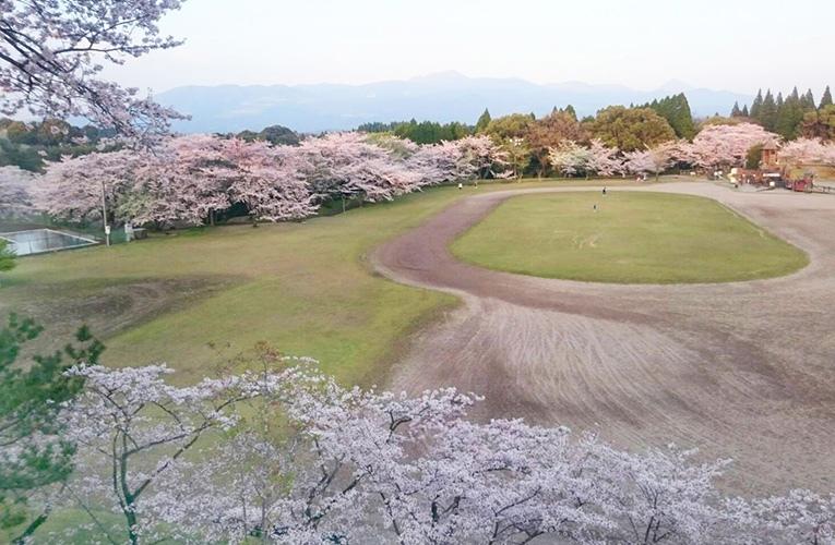 鹿児島の桜